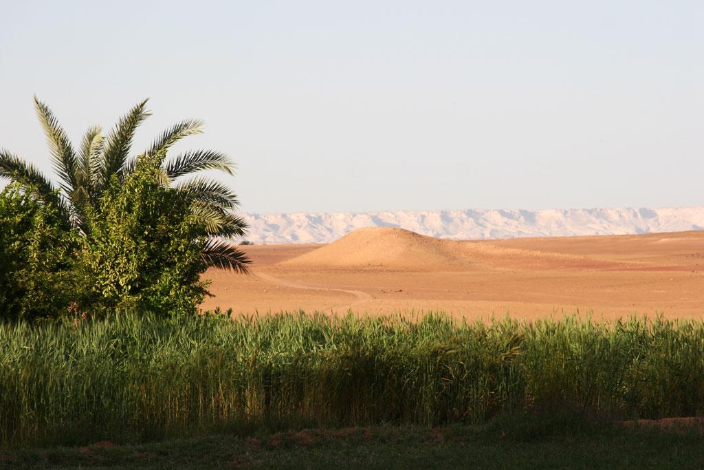 Жизнь в пустыне днем